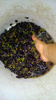 Sean Q. Meyer, winemaker, crushes grapes by hand.