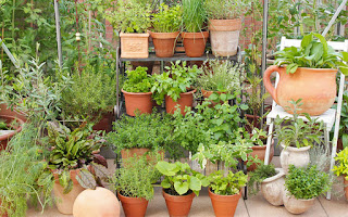 Garden Pots for container garden