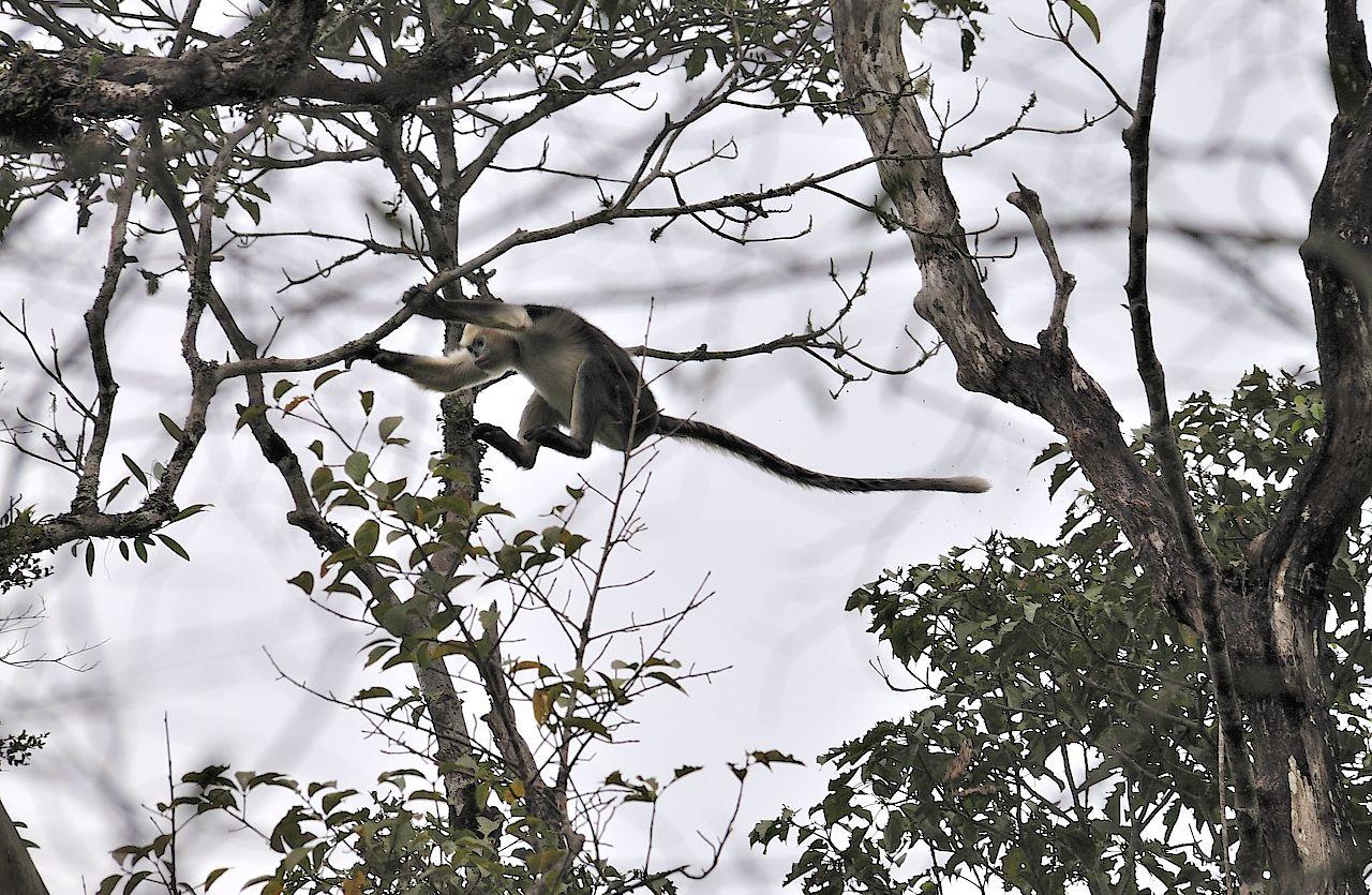Vietnam Bird News  Ha Giang Trip   Khau Ca Nature Reserve  7  13