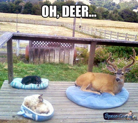 funny pets deer picture