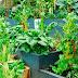 Taller Ecologico