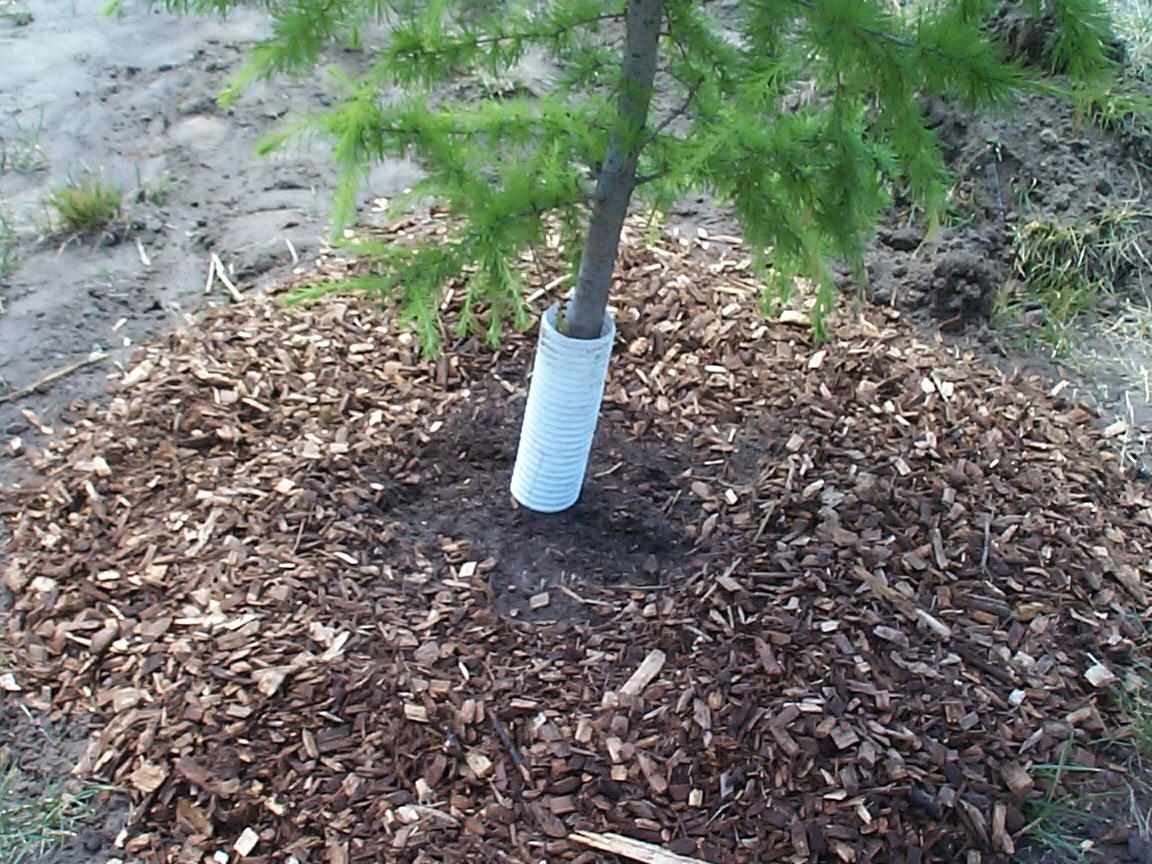 Comment conserver tuyaux jardin dans la saison de - Comment conserver des carottes du jardin ...