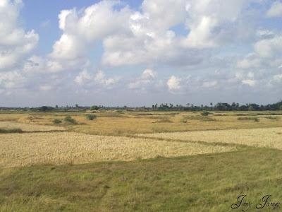 Journey between stations THIRUVARUR JN and NAGAPPATTINAM in TamilNadu