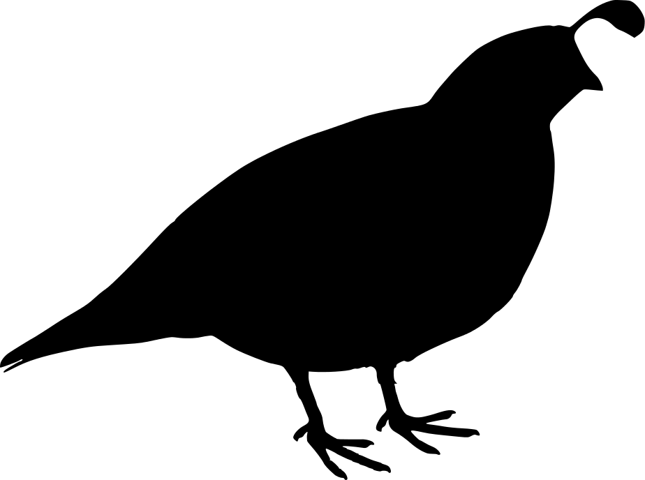 quail silhouette clip art - photo #3