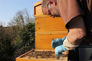 Imker beim Arbeiten am Bienenstock