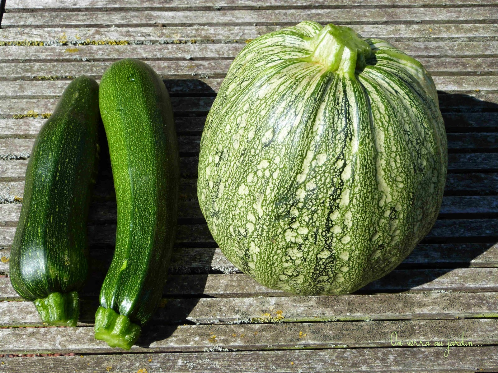 Nice Quand Semer Les Courgettes #13: Good Quand Semer Les Courgettes #8: Courgettes.jpg