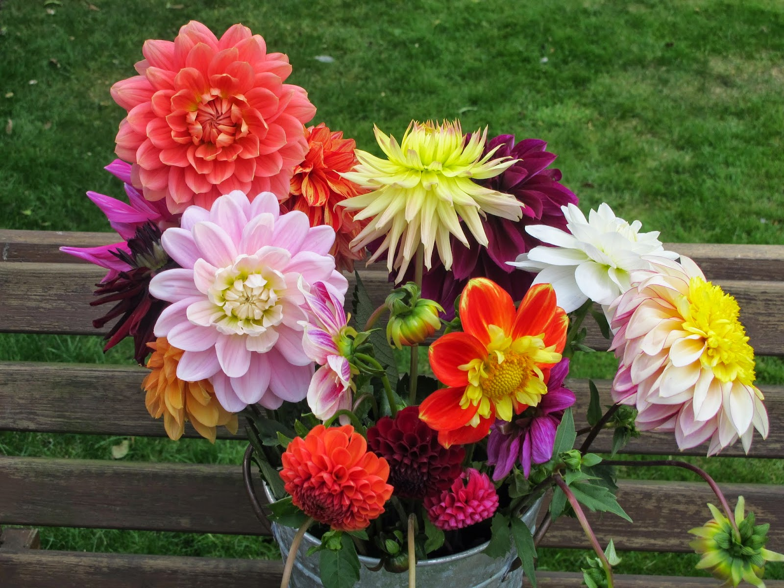 Flowers By Shamini Withypitts Dahlias The Cut Flowers