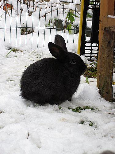 wie was warum wie sch tzt man den wassernapf der kaninchen vor dem einfrieren. Black Bedroom Furniture Sets. Home Design Ideas