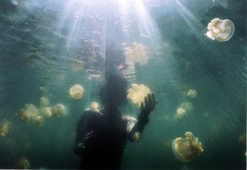 بالصور و الفيديو : بحيرة قناديل البحر فى جزيرة بالاو – اسبح مع ملاين القناديل دون أن تتعرض للإذى 6.jpg