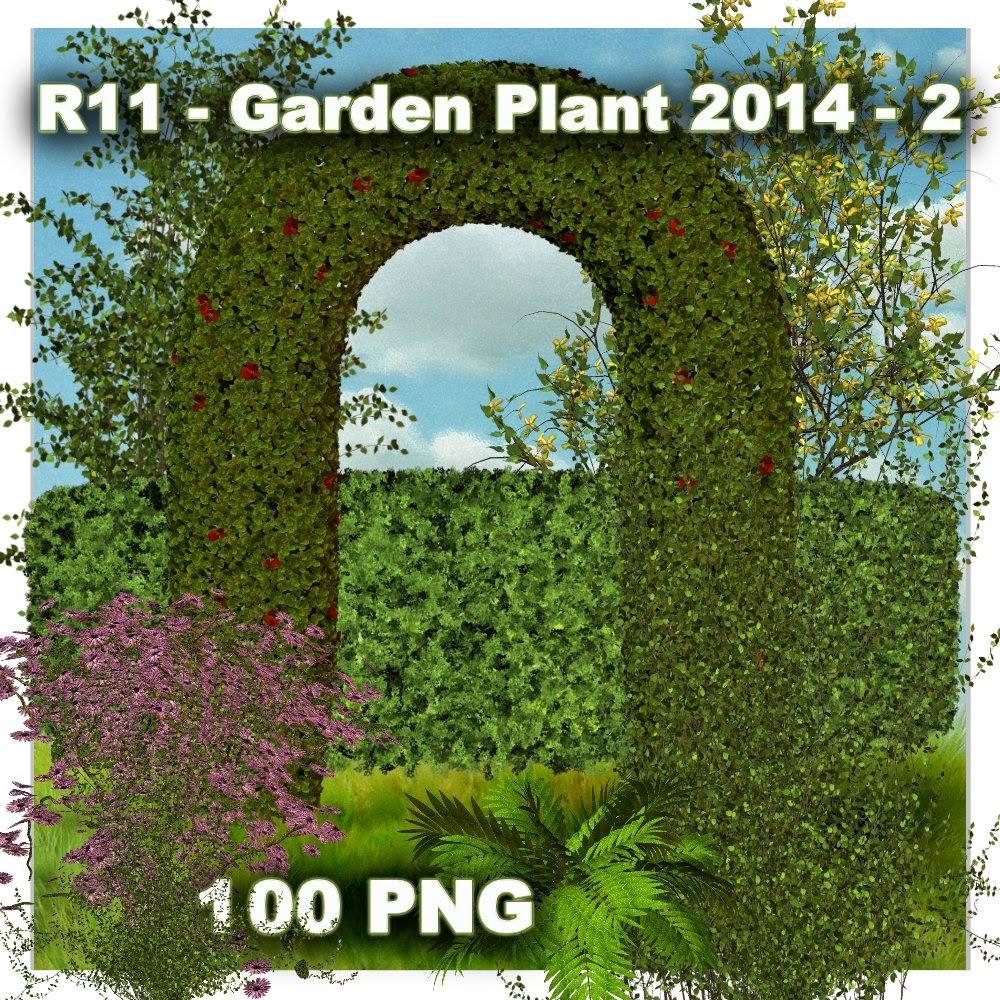 http://2.bp.blogspot.com/-f3lAUs6HlLk/U5ySzqBO1RI/AAAAAAAADYs/YfF_euJB7ss/s1600/R11+-+Garden+Plant+2014+-+2.jpg