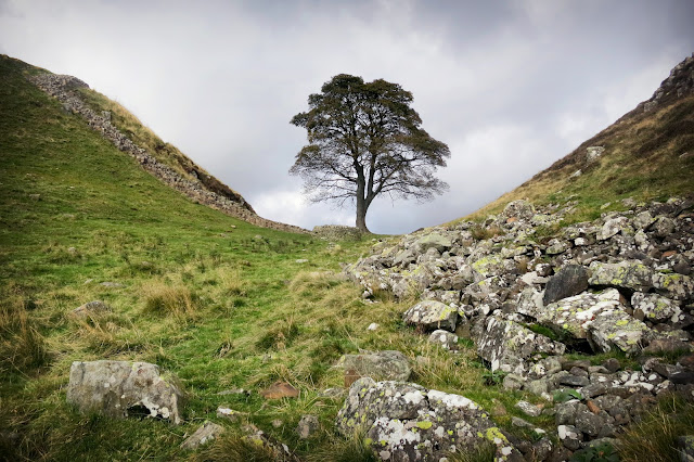 Best Hadrian's Wall View, Sycamore Gap, Robin Hood prince of thieves, best view, Best Hadrian's Wall Walk