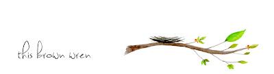 this brown wren