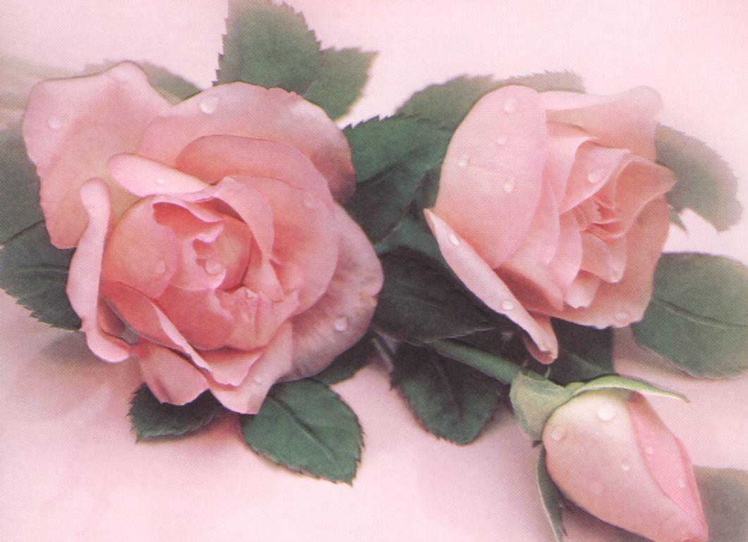 Vente a domicile les recettes l g res de chrissy for Rose a domicile