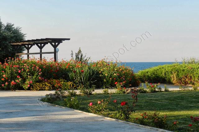 Yanitza's garden