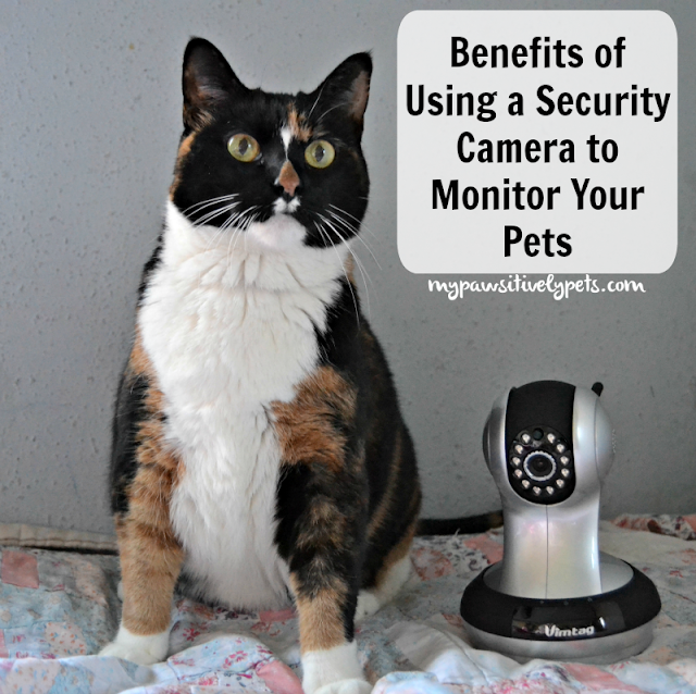 Benefits of Using a Security Camera to Monitor Your Pets