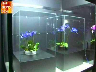 erste blaue orchidee gez chtet hot news blog wir. Black Bedroom Furniture Sets. Home Design Ideas