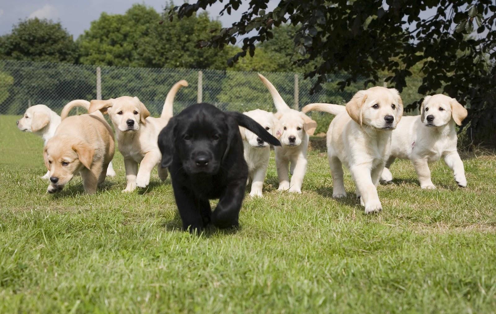 Dog Training Doreen