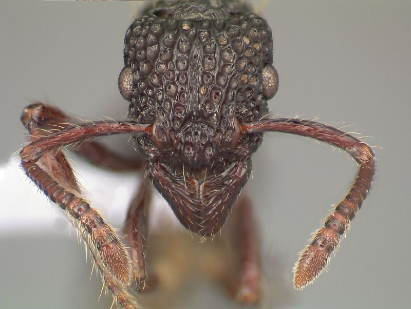 ant under a microscope - photo #41