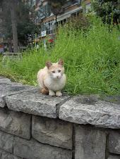 Sokakta ,balkonda baktığım kediler...