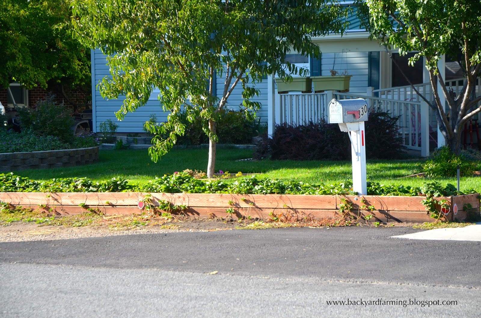 this yard in contrast shows a great use of the narrow parking strip