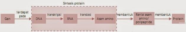 Bagan sintesis protein
