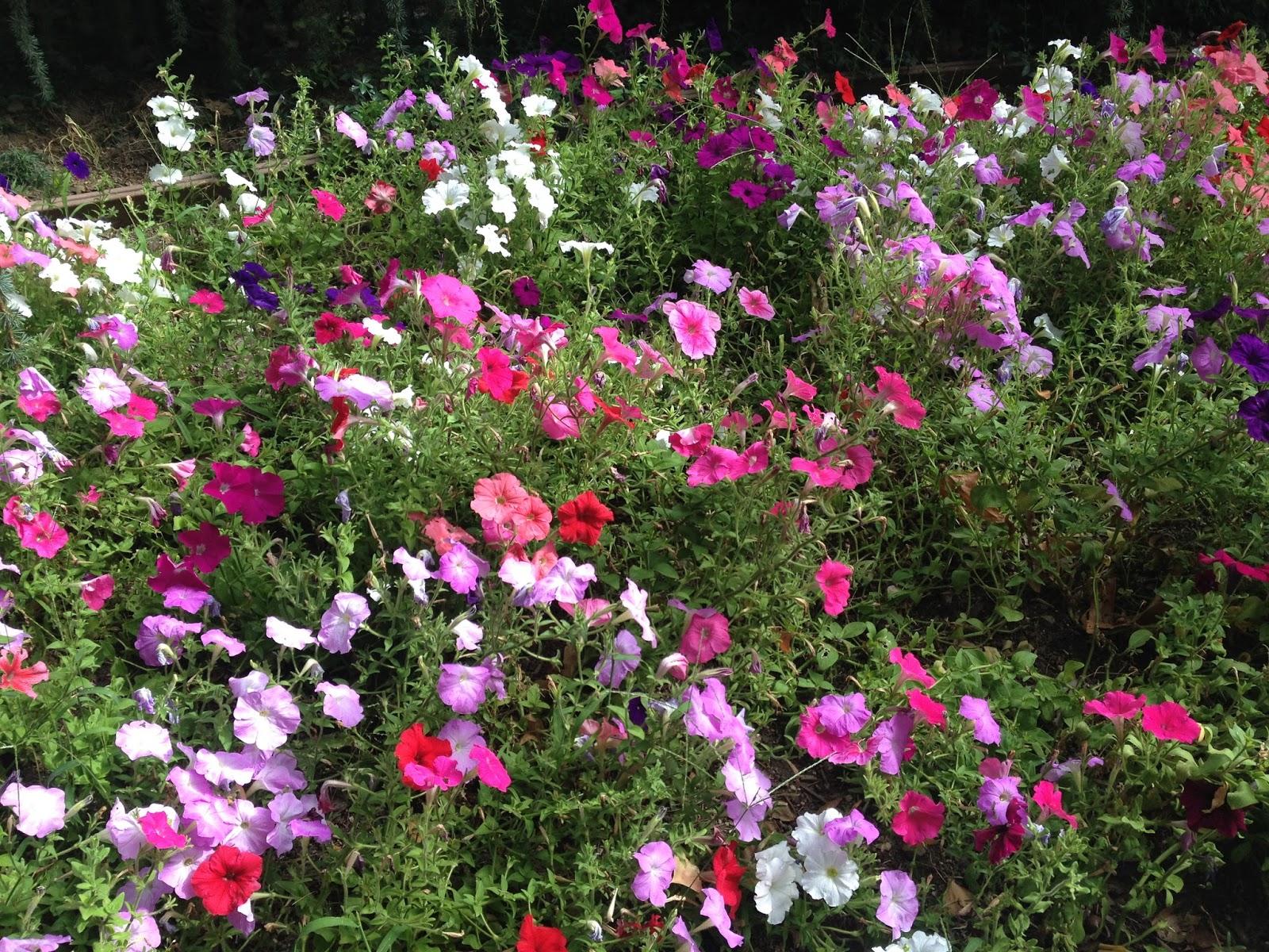 The pepper express gilroy gardens for Gilroy garden trees