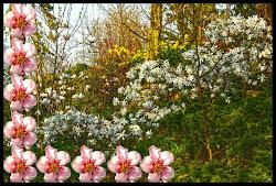 una cornice di fiori..r...acchiude..