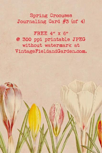 http://2.bp.blogspot.com/-f6_KeOEOQeA/U00FytHZTfI/AAAAAAAAIp4/1je8AYNTNVw/s640/Spring+Crocuses+Journaling+Card+3B+Preview.jpg