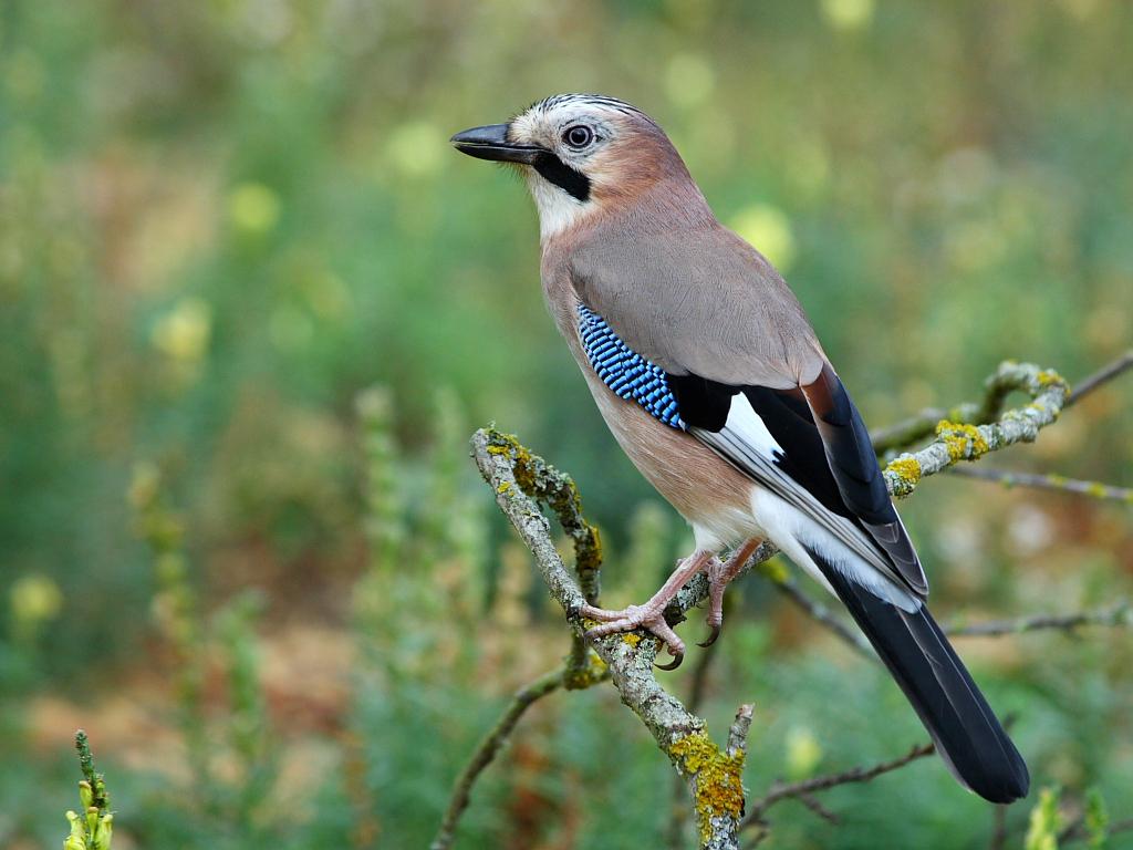 Foto e curiosit sugli uccelli del novarese referendum - Uccelli che sbattono contro le finestre ...