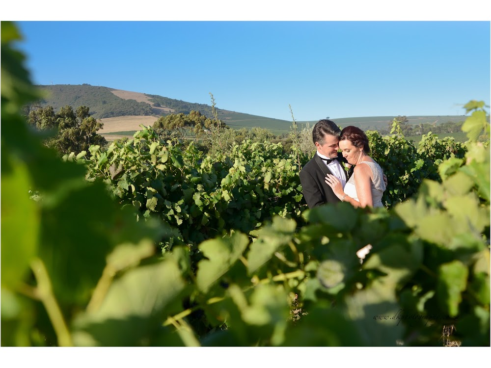 DK Photography last+slide-56 Ruth & Ray's Wedding in Bon Amis @ Bloemendal, Durbanville  Cape Town Wedding photographer