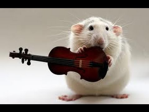 Funny Rat Pictures Images Photos