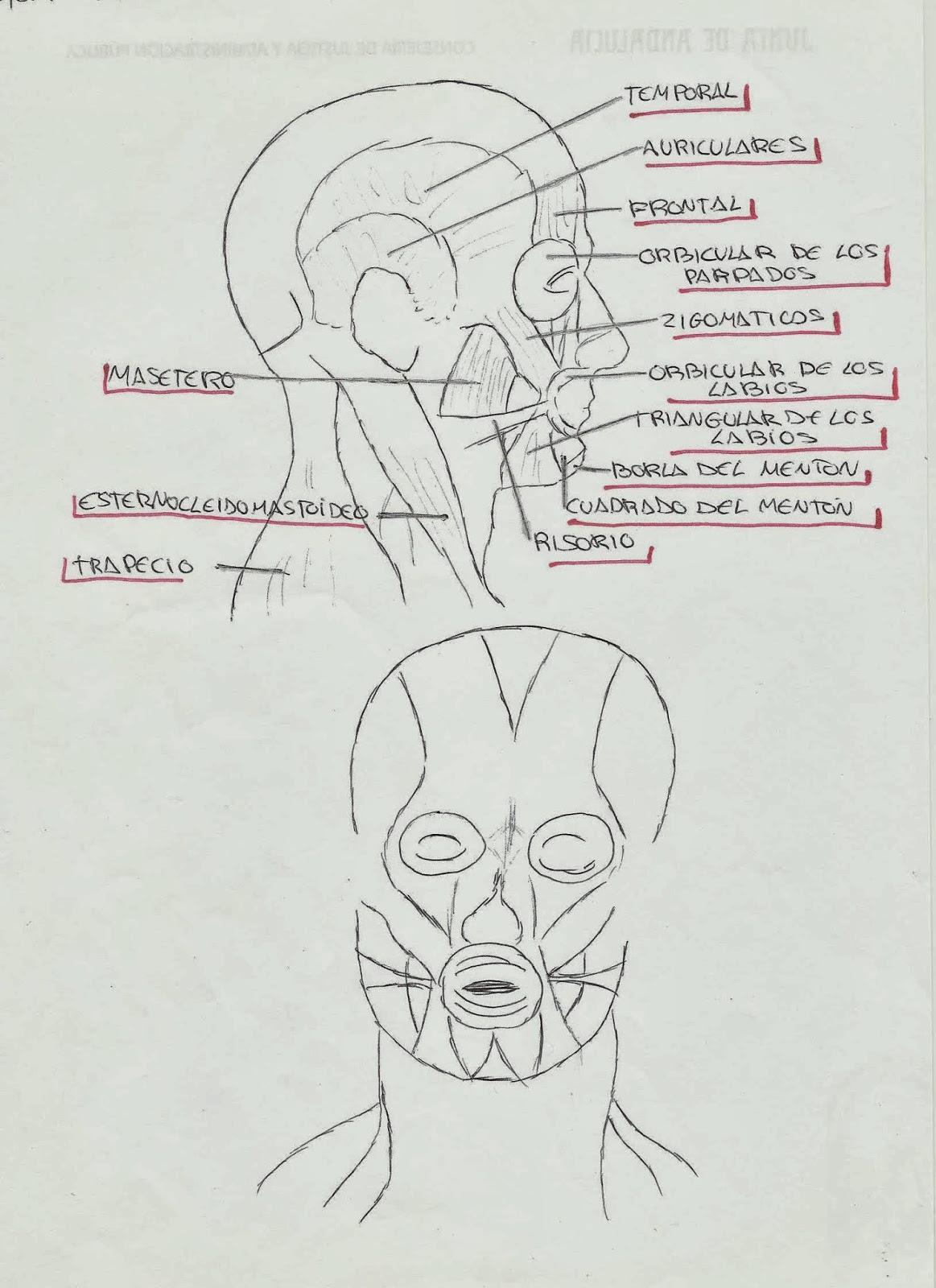 córneo masaje facial