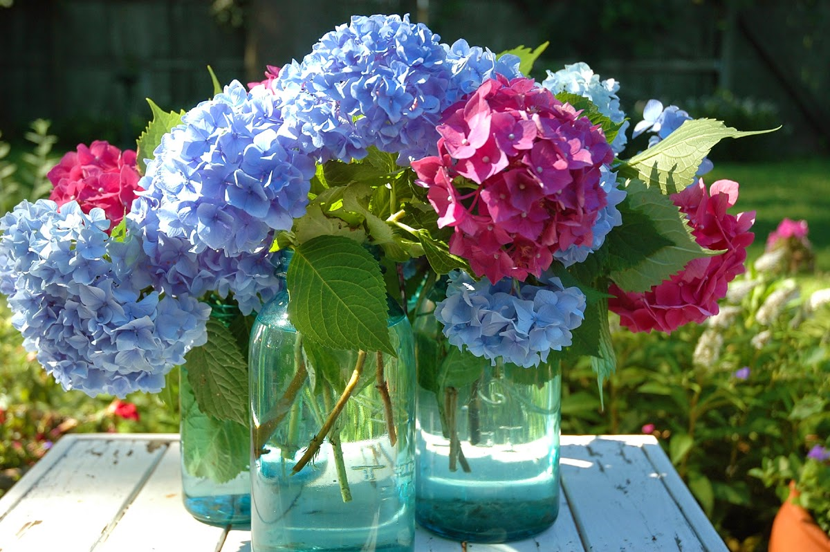 Hydrangea, Tammy Sue Willey