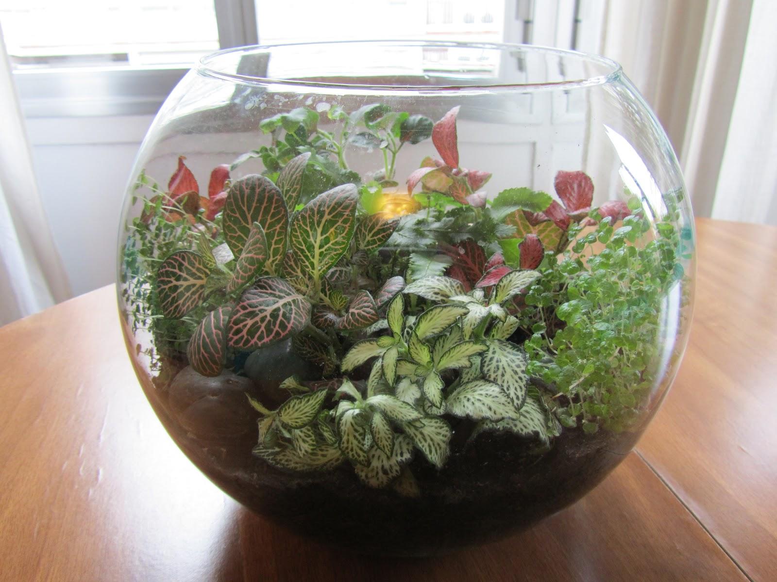 El Reino Plantae Como Hacer Un Terrario Paso A Paso - Terrario-para-plantas