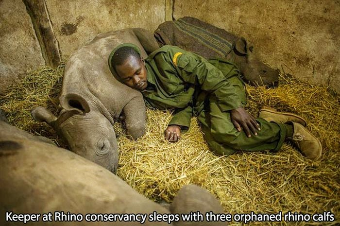 People doing amazing things for animals (28 pics), keeper at rhino conservancy sleeps with orphaned baby rhinos