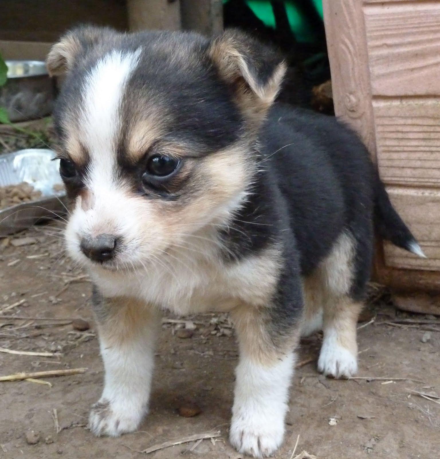 cani da adottare roma taglia piccola – ikners
