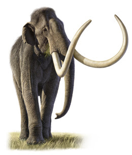The Archaeology News Network: Researchers solve mammoth ...