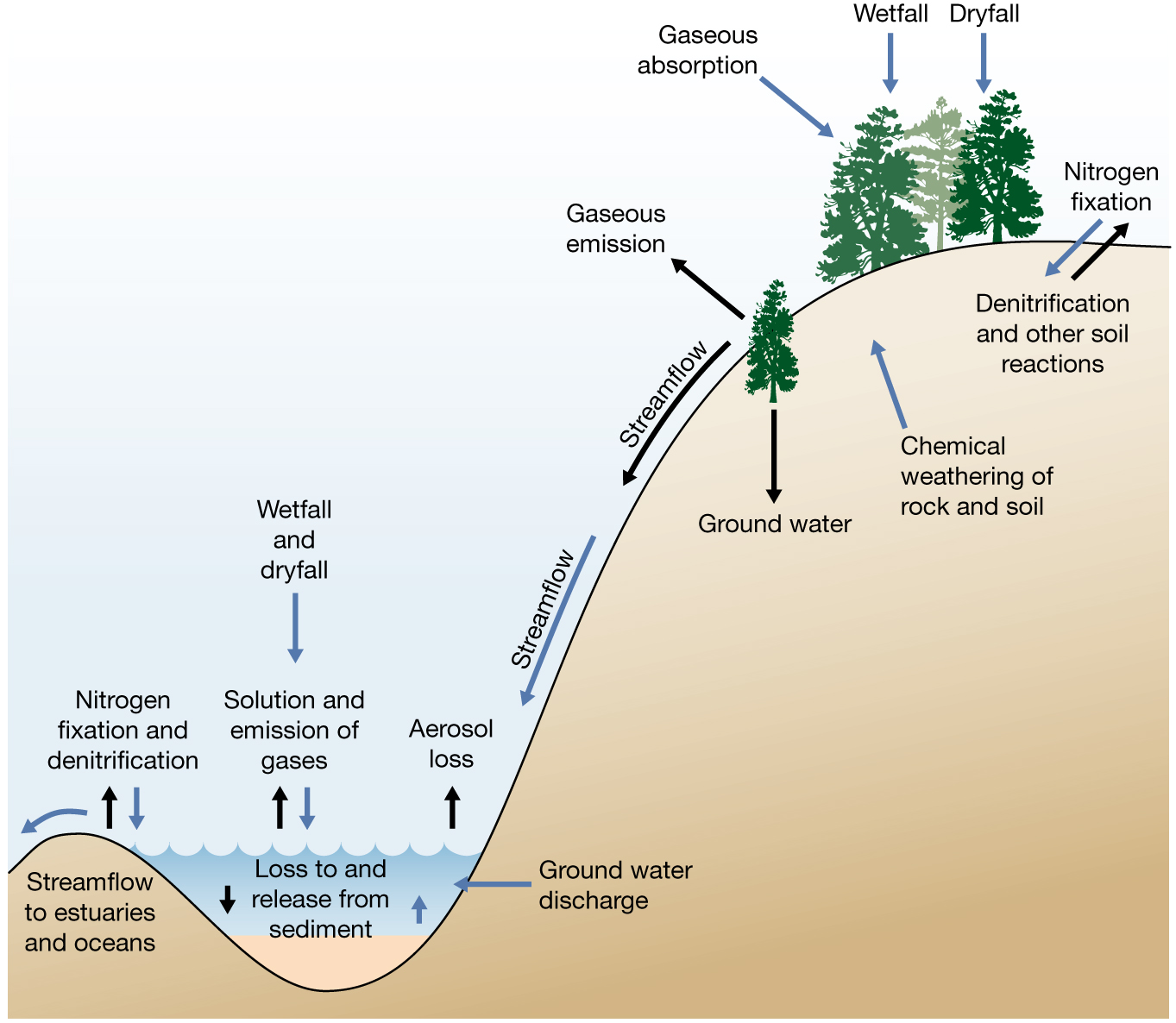 shappell.ecology: review resources for biogeochemical cycles