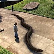 Титанобоа — вымерший вид змей