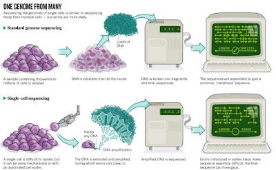 mapa - Um mapa integrado de variação genômica de 1.092 genomas humanos  Single-cell-sequencing
