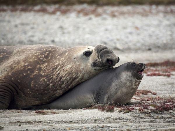 patagonia-wildlife-elephantseals