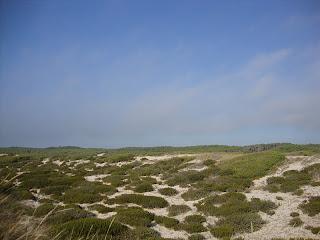 Osso da Baleia beach protected dunes photo
