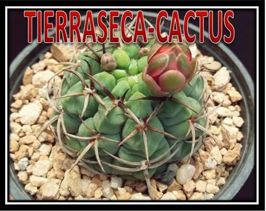 TIERRA SECA .Tienda online.