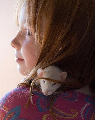 英國 精靈鼠