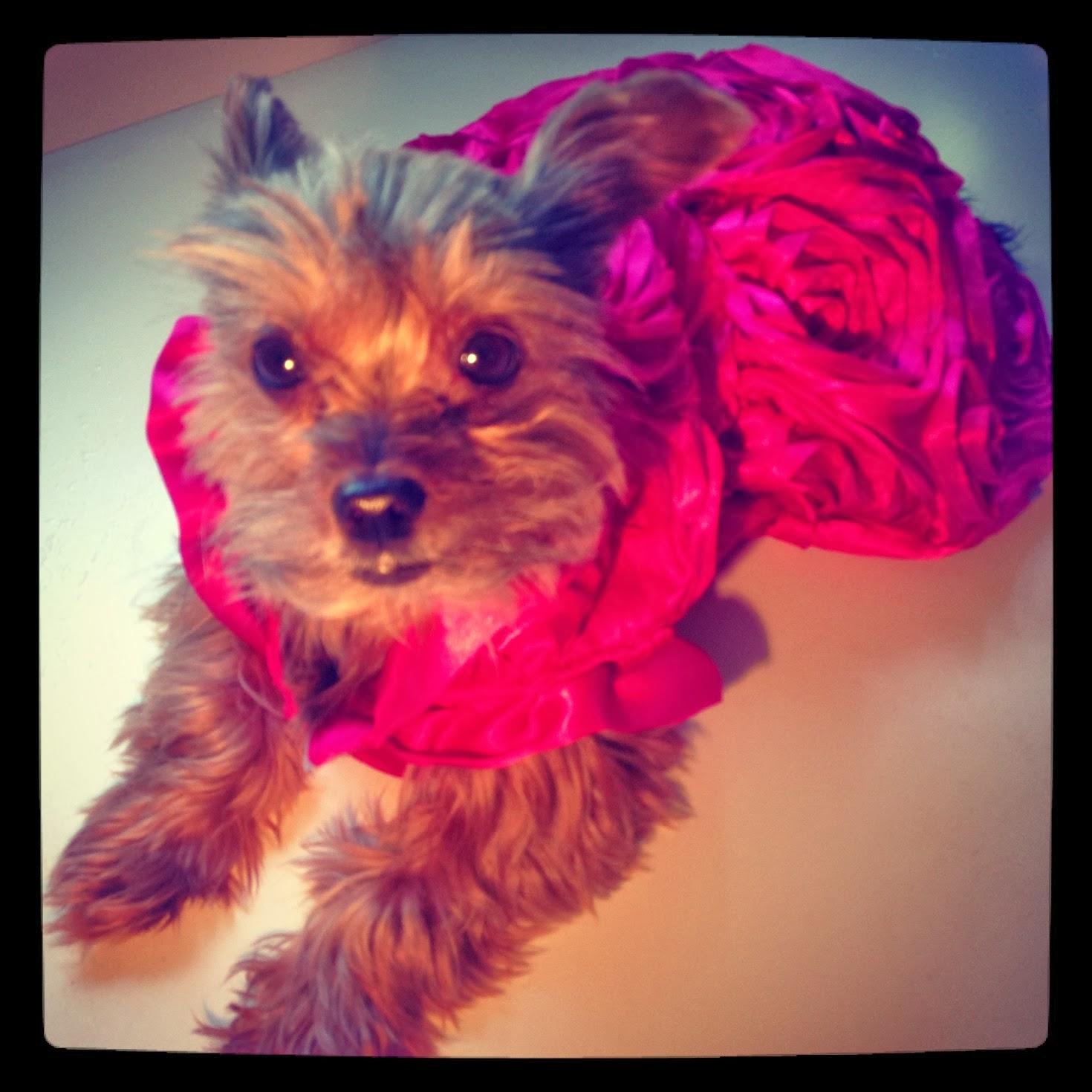 Lilly Foschino Dog Fashion pink vibes