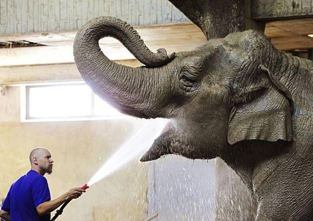Dando água da mangueira para o elefante