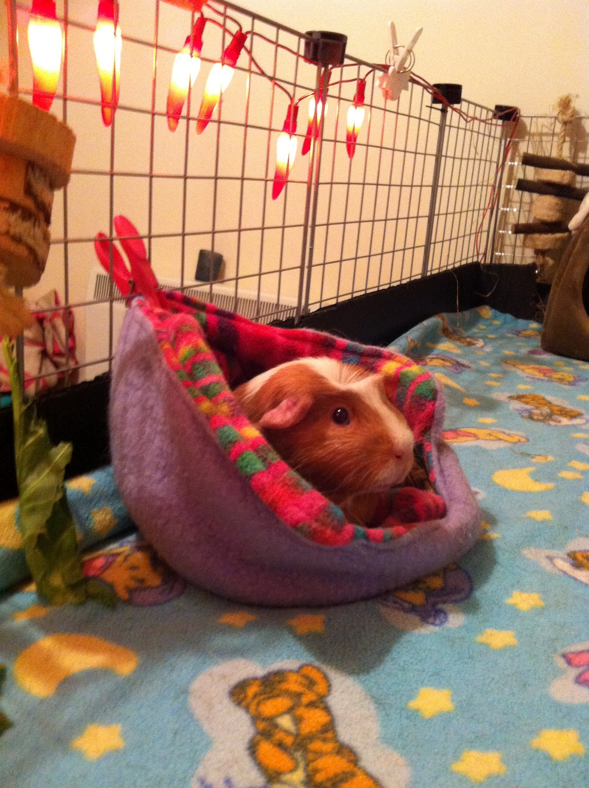 The Diary Of An Rspca Guinea Pig Day 6 Cosies