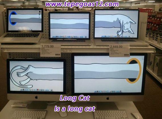 LOng cat portal