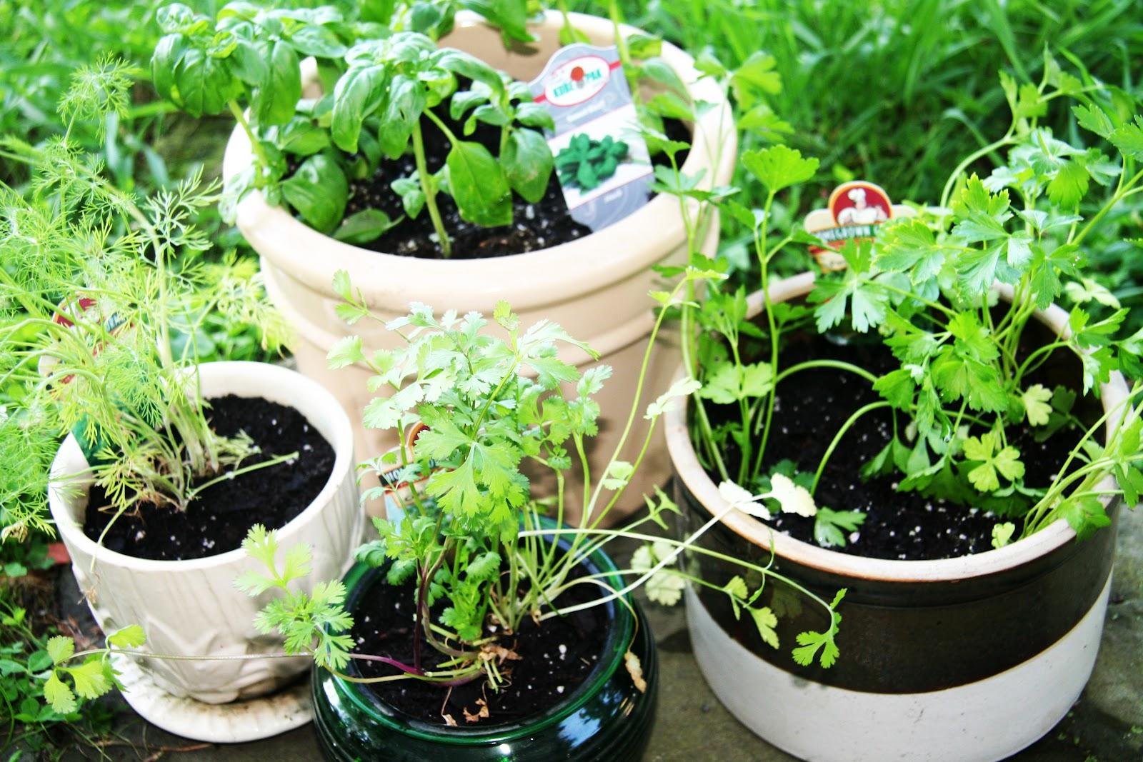 laurel bloomery girls Wikipedia:wikiproject tennessee/cleanup listing  laurel bloomery, tennessee nov 2008  girls preparatory school.