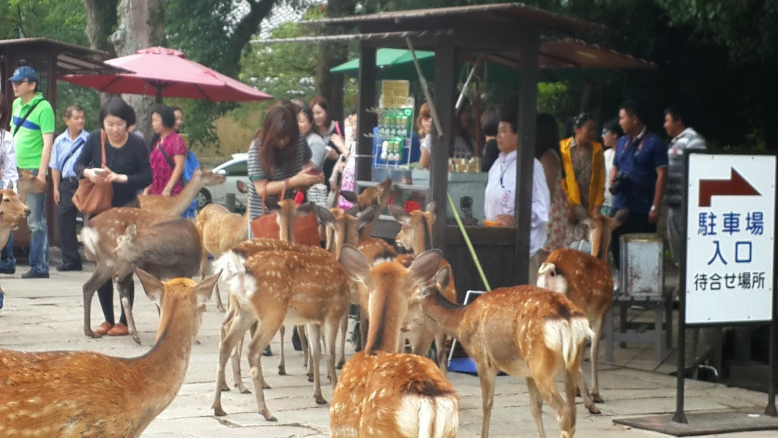 Deers waiting for treats